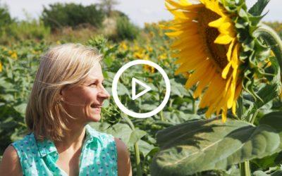 Das Strahlen der Sonnenblume
