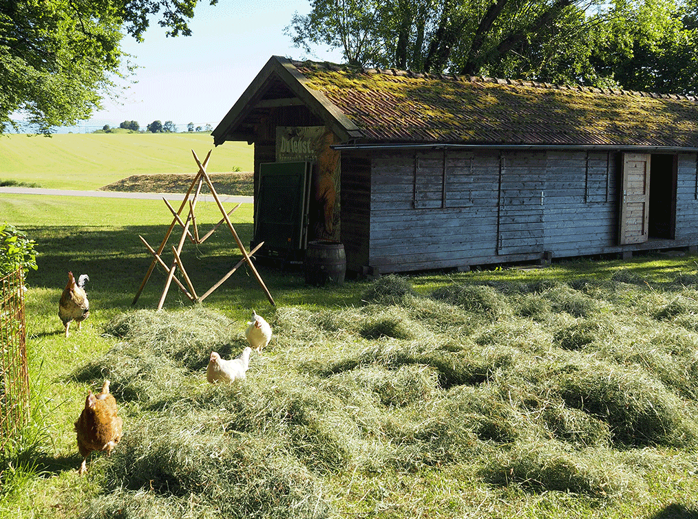 Villa-Natura-Gartenhühner