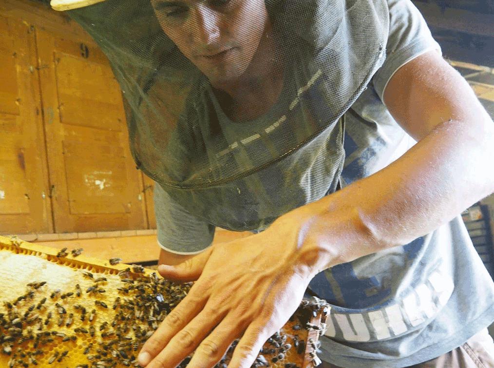 Villa-Natura-Bienen